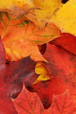 Quadro folhas de bordo