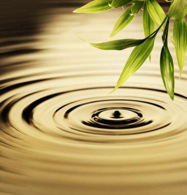 Quadro Folhas frescas de bambu sobre a água