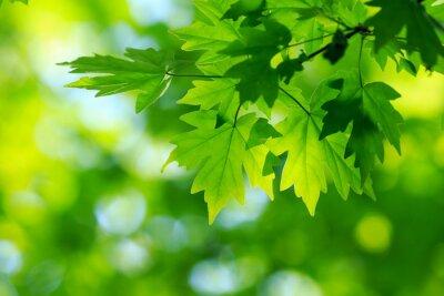 Quadro folhas verdes