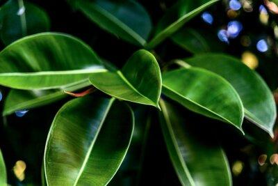 Quadro Folhas verdes frescas