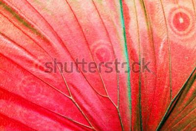 Quadro Foto macro detalhada de uma asa de borboleta tropical vermelha