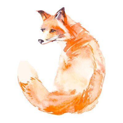 Quadro Fox isolado no fundo branco. Aguarela. .