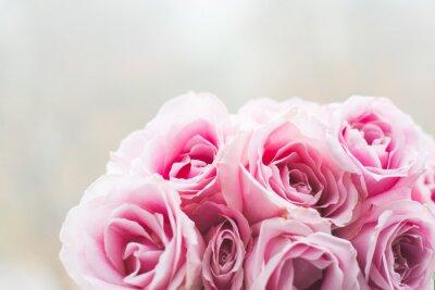 Quadro Fundo cor-de-rosa brilhante das rosas