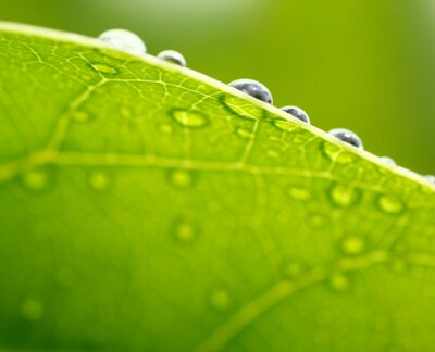 Quadro Fundo da folha verde fresca