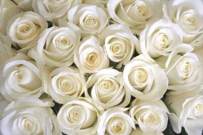 Quadro Fundo das rosas brancas