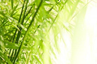 Quadro Fundo de bambu verde