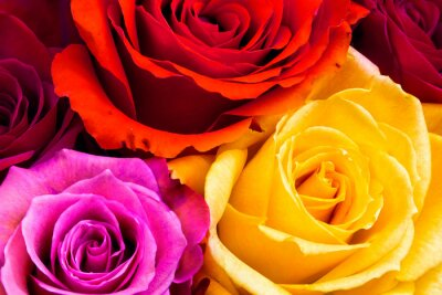 Quadro Fundo de rosas
