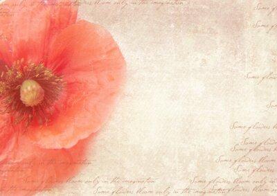 Quadro Fundo retro sujo com flores da papoila. Uma colagem estilo do vintage com flores da papoila, desvanecido escrita no papel velho gasto. Modelo do cartão.