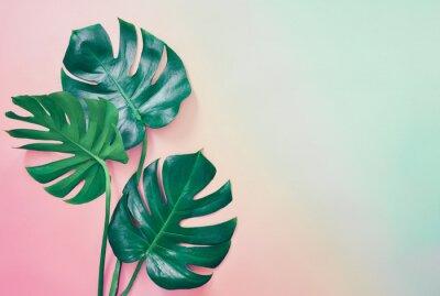 Quadro Fundo tropical de verão