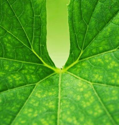 Quadro Fundo verde da folha