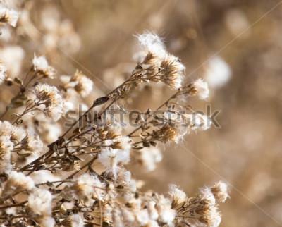Quadro fuzz na planta ao ar livre no outono