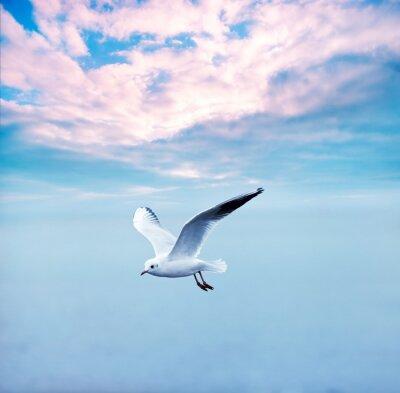 Quadro gaivota voando contra um céu de nuvens