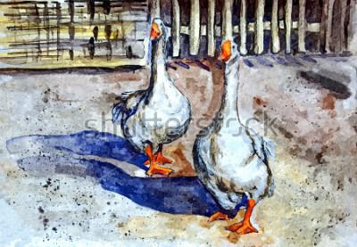 Quadro Gansos domésticos andam no quintal. Aquarela de desenho no papel. Arte Ingênua. Arte abstrata. Aquarela de pintura em papel.