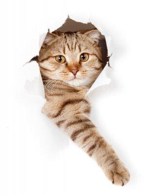 Quadro gato em buraco de parede branco