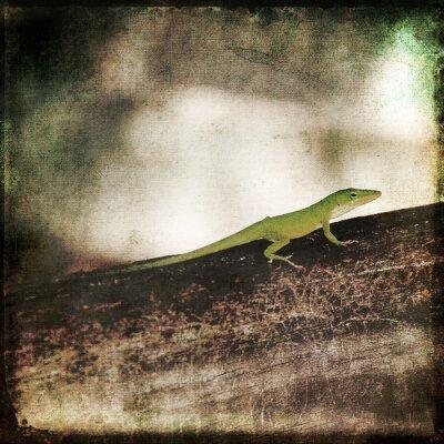 Quadro Gecko Green Camaleão Lagarto em Brown Wood Branch