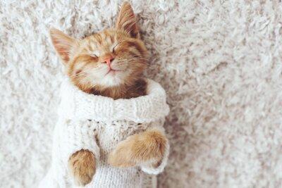Quadro Gigner gatinho