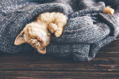 Quadro Gigner gatinho do sono