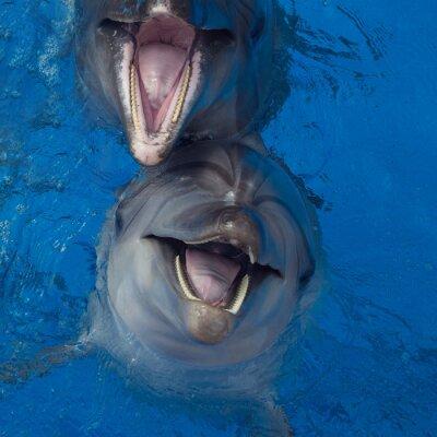 Quadro Golfinho de sorriso