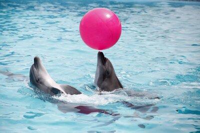 Quadro Golfinhos bonitos durante um discurso no dolphinarium