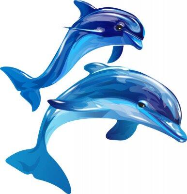 Quadro Golfinhos brancos