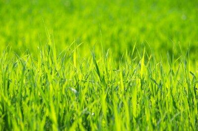 Quadro Grama verde