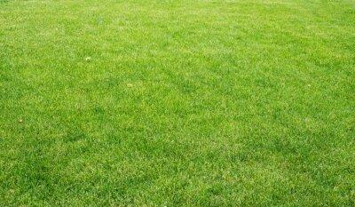 Quadro Gramado verde