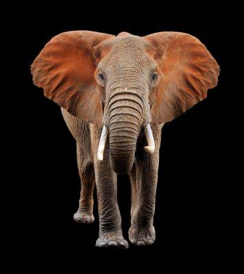 Quadro Grande, elefante, pretas, fundo