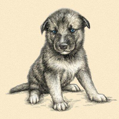 Quadro Gravar cão ilustração