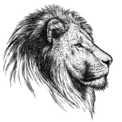 Quadro Gravar leão ilustração