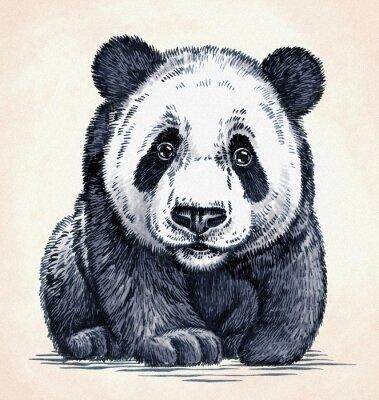 Quadro Gravar tinta desenhar panda ilustração