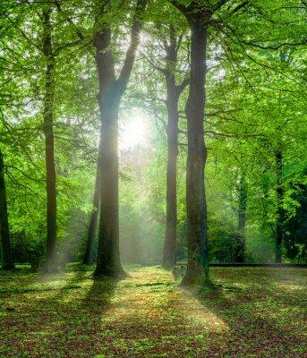 Quadro Grüner Wald im Sommer mit Gegenlicht