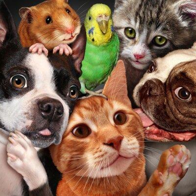 Quadro Grupo Pet