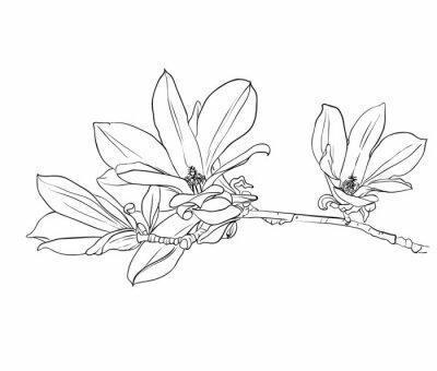 Quadro Hand drawn magnolia flowers.