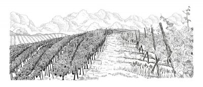 Quadro Hill of vineyard landscape with city, clouds on horizont hand drawn sketch vector illustration isolated on white