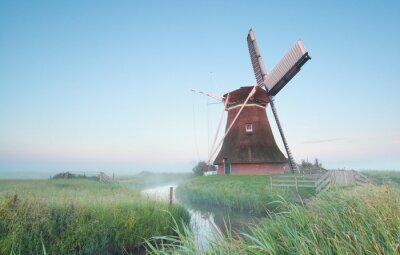 Quadro Holandês, moinho de vento, manhã, luz