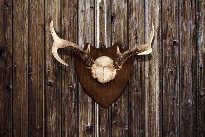 Quadro Horns em uma parede de madeira