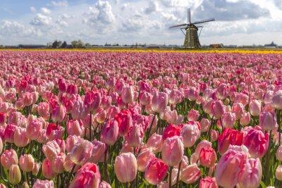 Quadro Iconic tulipas holandesas fazenda bulbo no tempo de mola em Amesterdão