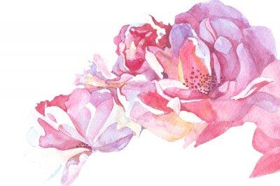 Quadro Ilustração cor-de-rosa da aguarela do fundo