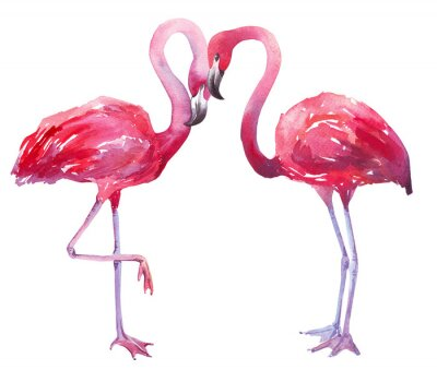Quadro Ilustração da aguarela de um flamingo