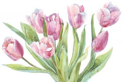 Quadro Ilustração da aguarela do ramalhete das tulipas