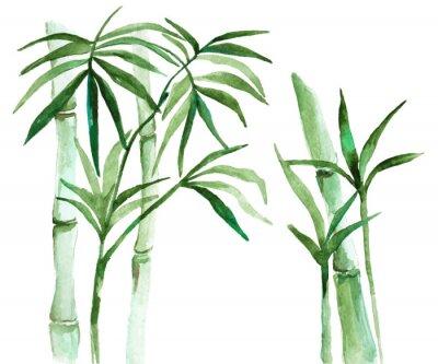 Quadro Ilustração de bambu de aquarela