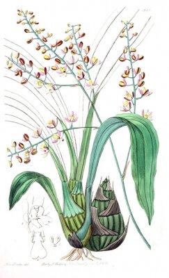 Quadro Ilustração, de, planta