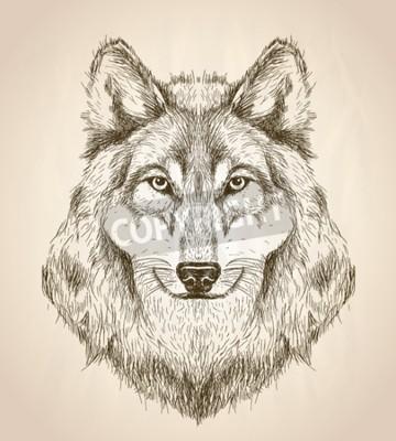 Quadro Ilustração do esboço do vetor de uma opinião dianteira da cabeça do lobo, projeto preto e branco dos animais selvagens do vetor.