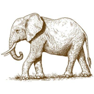 Quadro ilustração do vetor de elefante gravura