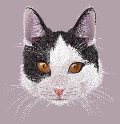 Quadro Ilustração Retrato de gato doméstico. Gato bi-colorido novo bonito com olhos alaranjados.