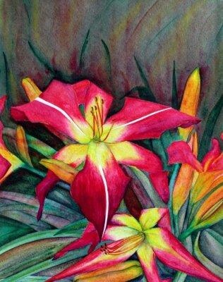 Quadro Ilustrações acrílicas de flores brilhantes. Lírios de dia das flores.