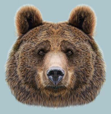 Quadro Ilustrado, retrato, urso, azul, fundo