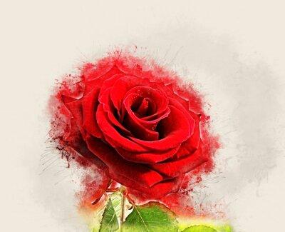 Quadro Imagem de Grunge Rose