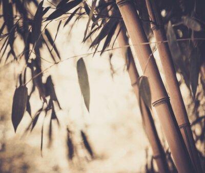 Quadro Imagem tonificada de uma planta de bambu