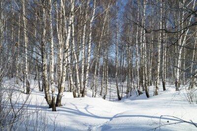 Quadro Inverno, paisagem, branca, vidoeiro